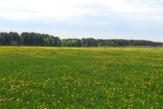 Власти Подмосковья выкупят у собственников 2700 га сельскохозяйственных земель